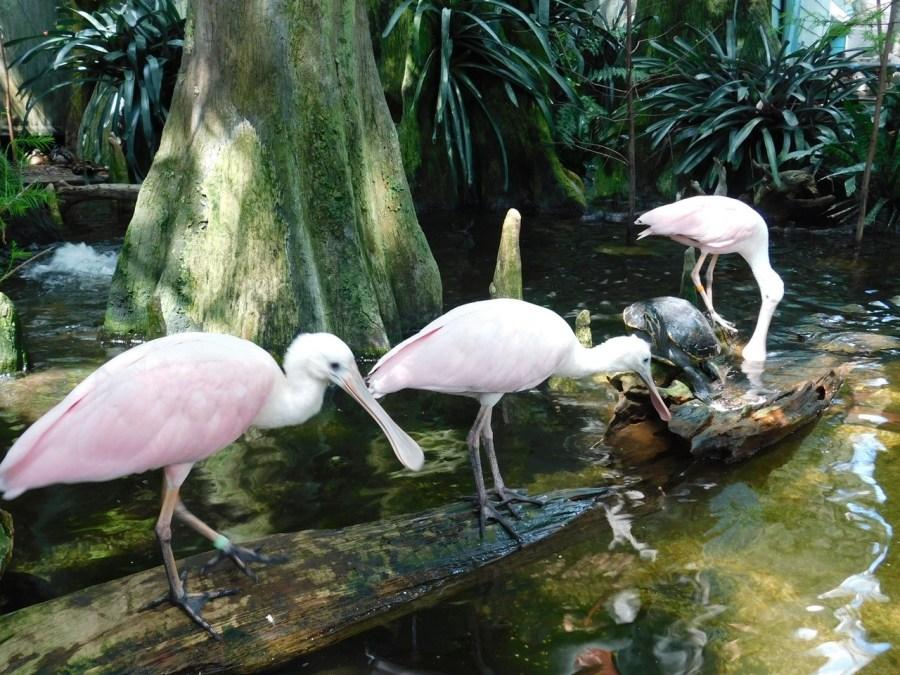 Florida Aquarium à Tampa / Floride