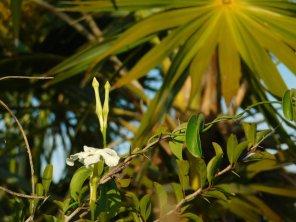 Big Pine Key / Floride