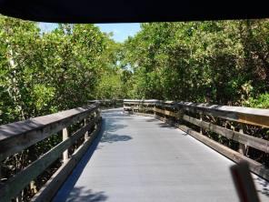 Mangrove près de la plage de Clam Pass Park à Naples en Floride