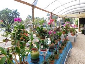 Orchidées à la Phil's Berry Farm dans le Redland de Homestead (près de Miami en Floride)