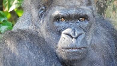 Photo of Monkey Jungle de Miami : les singes sont dehors, et vous dans la cage !