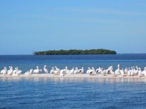 Les 10 000 Islands de Everglades, sur la côte ouest de la Floride.