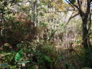 Fakahatchee Boardwalk (Everglades)