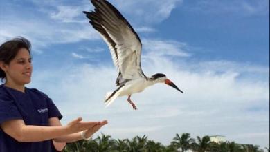 Photo of Pelican Harbor : un hôpital pour oiseaux sur une île de Miami Beach