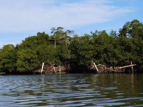 Mangrove de Lovers Key en Floride