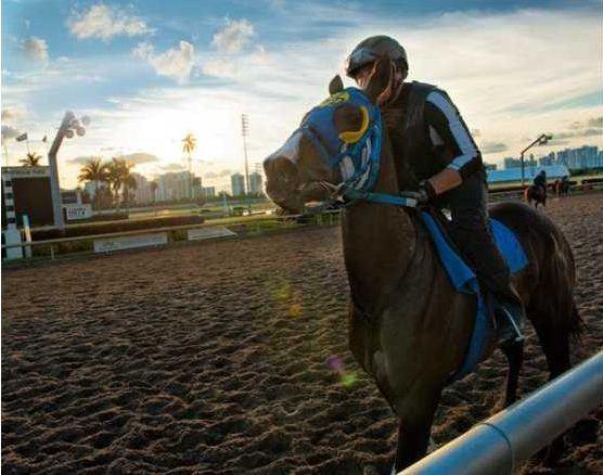 Entraînement de chevaux de courses au Gulfstream Park