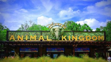 Photo of Visiter Disney's Animal Kingdom à Disney World Orlando