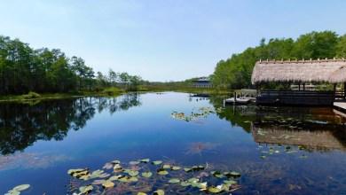 Photo of Grassy Waters Preserve : un joli parc des Everglades à West Palm Beach