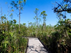 Le parc Grassy Waters Preserve (Everglades, à West Palm Beach)