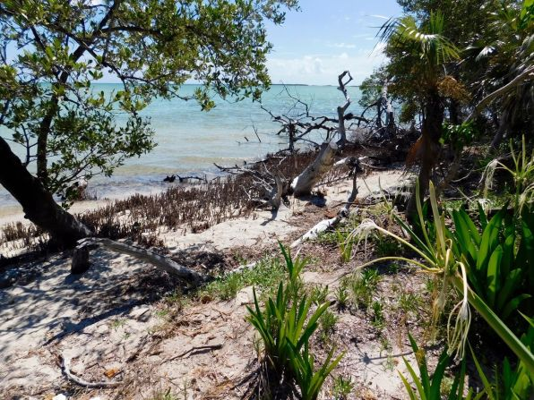 Backcountry des Lower Keys : Marvin Key et Barracuda Keys (Floride)