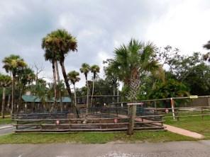 Billie Swap Safari, Floride