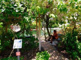 Butterfly World, le parc à papillons de Coconut Creek en Floride.