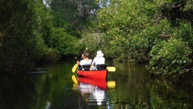 Photo of Little Manatee River en canoë-kayak : une magnifique descente (entre Tampa et Bradenton)