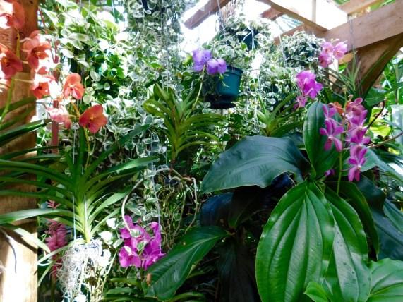 Jardins botaniques Mary Selby Botanical Gardens à Sarasota (Floride)