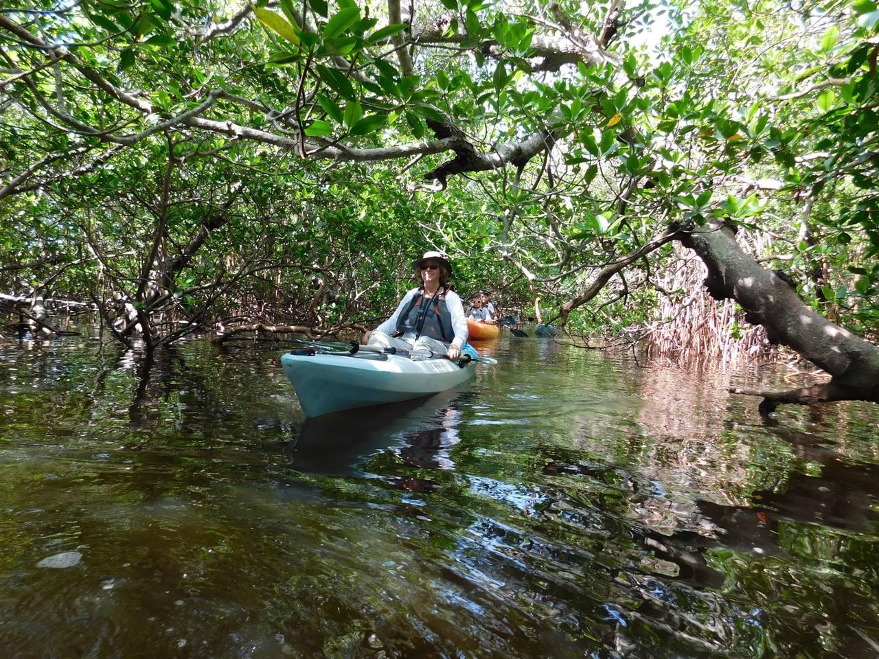 Rookery Bay Kayak Naples Floride 8406 Le Courrier De Floride