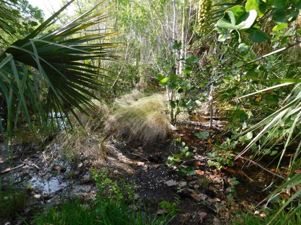 Plage de Bowman's Beach sur l'île de Sanibel (Floride)