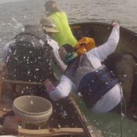 Un requin-bouledogue en colère attaque des canoës à Key West (vidéo)