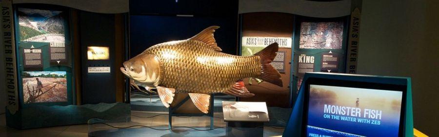 Expo : Les derniers géants des rivières