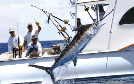 Bahamas Biminis - Pêche Bonefish