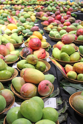 International Mango Festival de Coral Gables