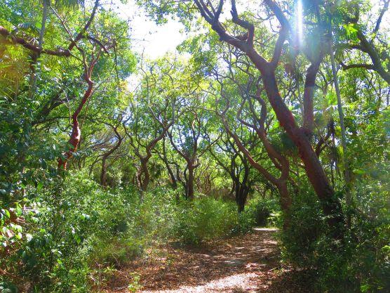 Bahamas Bimini Nature Trail
