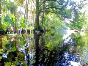 La Loxahatchee River, au niveau de Jupiter (Floride)