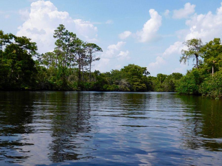 La Loxahatchee River dans le Jonathan Dickinson State Park (Floride)