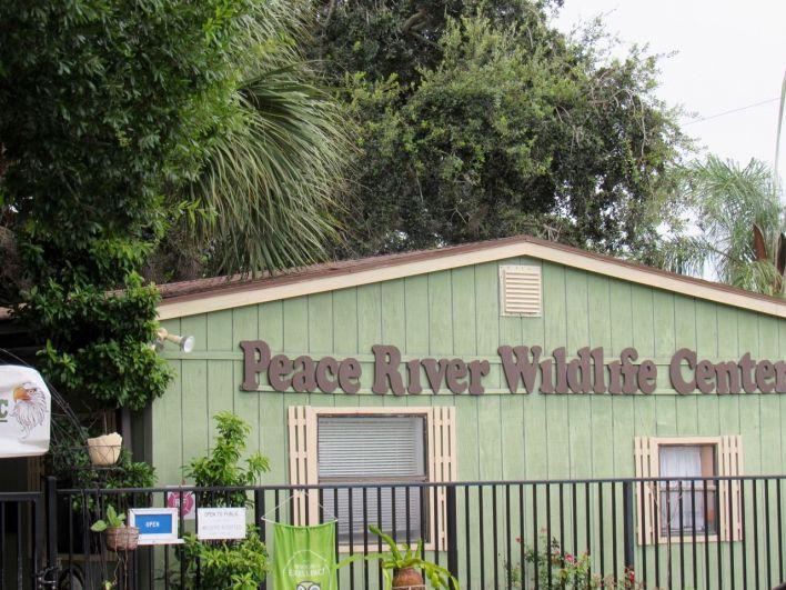 Peace River Wildlife Center, au Ponce de Leon Park de Punta Gorda, en Floride)