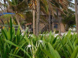 Playa Santa Fe à Tulum