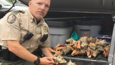 Photo of Key West : 15 jours de prison pour avoir ramassé des coquillages !