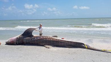 Photo of Floride : D'où vient la marée rouge qui rend la côte ouest infréquentable ?