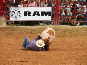 Davie Pro Rodeo à Davie en Floride