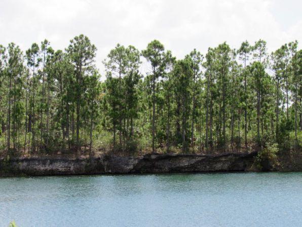 Pine rocklands vus du zoo de Miami