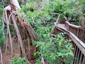 Gumbo Limbo Nature Center à Boca Raton