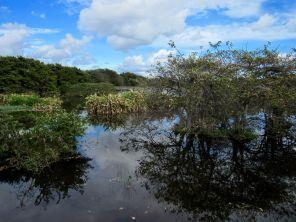 Wakodahatchee Wetlands à Delray Beach