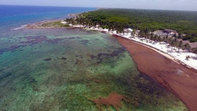 Photo of Les sargasses : un problème également inquiétant pour la Floride
