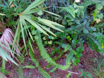Coucher de soleil au Okeeheelee Park de West Palm Beach en Floride