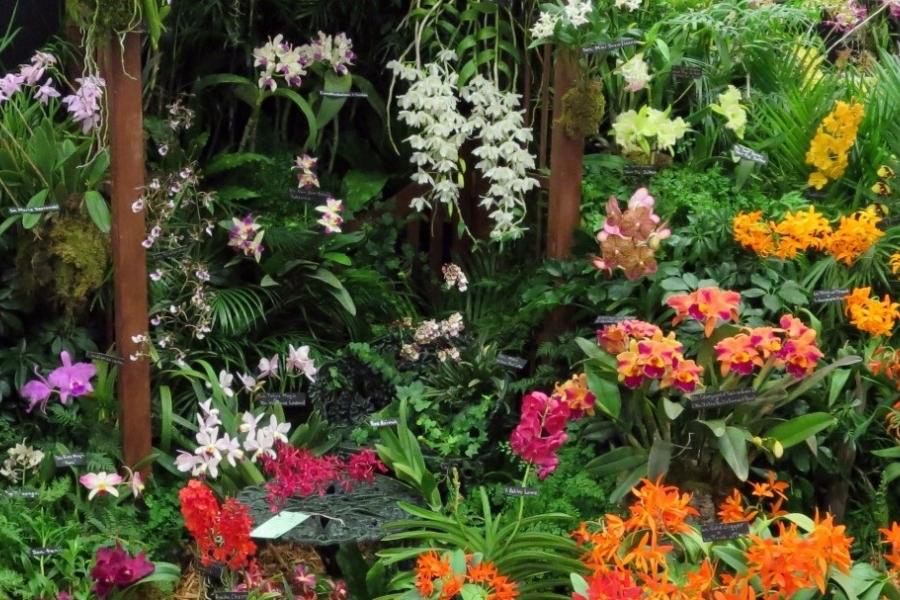Naples Orchid Show & Sale