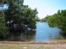 La mangrove à Coconut Grove