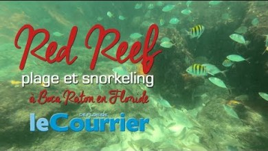 Photo of Snorkeling sur la plage de Red Reef à Boca Raton (vidéos de la Floride)