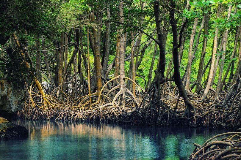 Parque Nacional de Los Haïtises en République Dominicaine