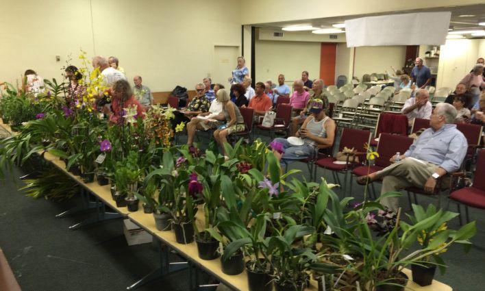 Vente aux enchères d'orchidées à Fort Lauderdale