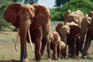 Série Apple TV : The Elephant Queen