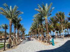 Les allées de palmiers entre le parc et la plage