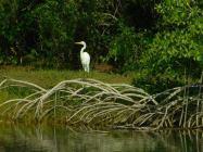 Coconut Grove / miami