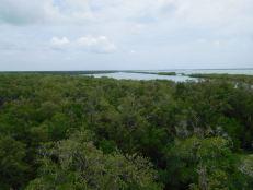 Les Evergaldes à Everglades City