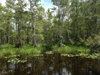 Loop Road -Everglades - Floride