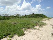 Palm Beach : John D. MacArthur Beach State Park, plage, mangrove