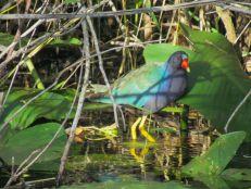 Paysage à Anhinga Trail (Everglades national Park)
