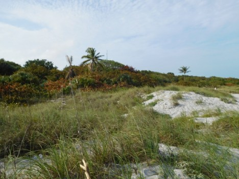 Plage du Bill Baggs Cape Florida State Park / Key Biscayne / Miami
